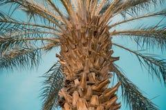 Palme über Himmelhintergrundabschluß oben Lizenzfreie Stockfotos