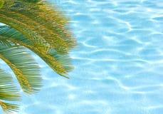 Palme über Pool Stockfotografie
