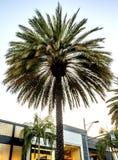 Palme, über Rodeo - Rodeo-Antrieb - Los Angeles, LA, Kalifornien, CA stockbilder