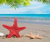 Palme über Starfish Stockfotos