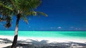 Palme über tropischer Lagune mit weißem Strand stock video