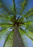 Palme 2 Lizenzfreie Stockbilder