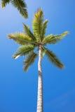 Palme 3 Stockfotografie