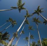 Palme immagine stock
