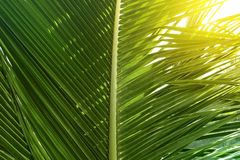 Palme Stockfotos