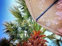 palme Stockfoto