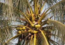 palme Stockfotografie
