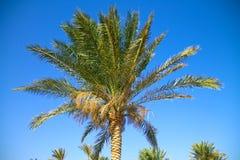 palme Lizenzfreies Stockfoto