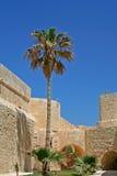 Palme Stockbilder