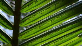 palme stock video footage