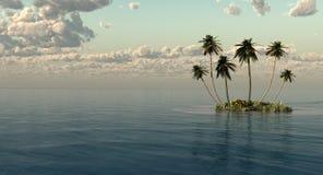 palme Immagini Stock