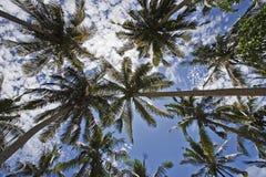 Palme fotografie stock libere da diritti