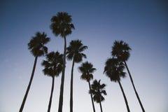 Palme acht am Sonnenuntergang Lizenzfreie Stockfotografie