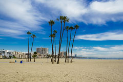 Palme ad una spiaggia in Long Beach Fotografia Stock