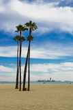 Palme ad una spiaggia in Long Beach Immagine Stock Libera da Diritti
