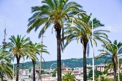 Palme al porto a Genova, Italia fotografie stock libere da diritti