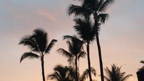 Palme al tramonto Fotografie Stock Libere da Diritti