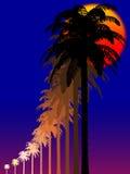Palme alla notte Immagini Stock
