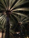 Palme alla notte Fotografia Stock
