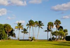 Palme alla spiaggia fotografia stock