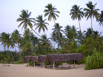 Palme alla spiaggia Immagini Stock