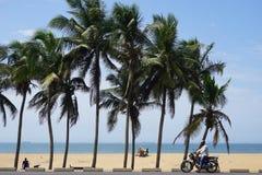 Palme alla spiaggia di Lomè nel Togo fotografia stock