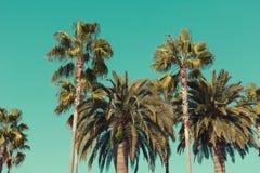 Palme alla spiaggia di Santa Monica Fotografie Stock