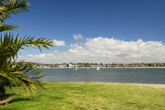 Palme alla spiaggia a San Diego Immagine Stock