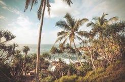 Palme alte sulla bella spiaggia con le onde calme, aloe vera intorno Paesaggio tropicale dell'Asia Meridionale Fotografie Stock Libere da Diritti