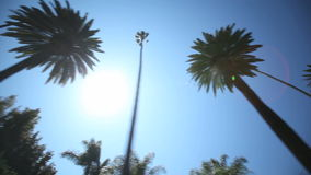 Palme-Antrieb stock video