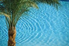 Palme auf blauem Pool Stockbild