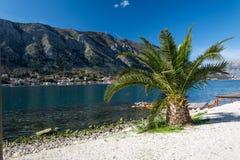 Palme auf dem adriatisches Seestrand Stockfotos