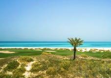 Palme auf dem arabischen Golf Die Saadiyat-Insel Abu Dhabi stockbilder