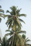 Palme auf dem blauen Himmel lizenzfreies stockfoto