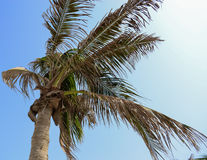Palme auf dem blauen Himmel Lizenzfreie Stockbilder
