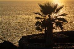 Palme auf dem Küste Ð ¾ n der Sonnenuntergang stockfotos