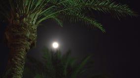 Palme auf dem Licht der Lampe stock footage