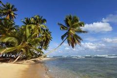 Palme auf dem Meer Stockfotos
