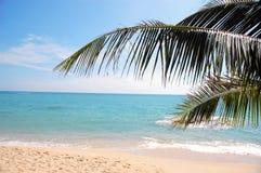 Palme auf dem Meer Lizenzfreies Stockfoto