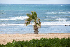 Palme auf dem Seestrand Lizenzfreie Stockbilder