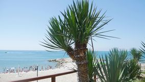 Palme auf dem Strand stock video footage