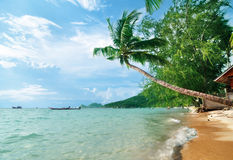 Palme auf dem Strand Lizenzfreies Stockfoto