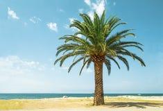 Palme auf dem Strand Stockfotos
