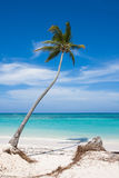 Palme auf dem Strand Stockfotografie