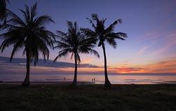 Palme auf dem Strand in der Dämmerung Stockfotos