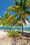 Palme auf dem Strand florida Lizenzfreies Stockfoto