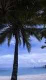 Palme auf dem Strand, im November 2014 Lizenzfreies Stockbild