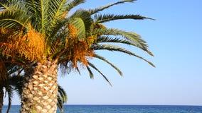 Palme auf dem tropischen Strand, ausgezeichnete Natur, regen Wunschfeiertag auf stock video footage