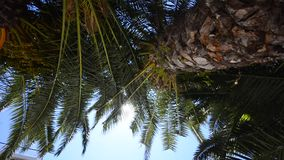 Palme auf der niedrigeren Ansicht des tropischen Strandes, breites Trieb stock video