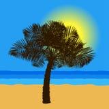 Palme auf der Seeküste bei Sonnenuntergang lizenzfreie abbildung
